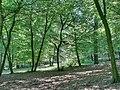 Forest - panoramio - paulnasca (69).jpg