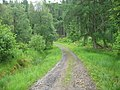 Forest Track - geograph.org.uk - 1396950.jpg