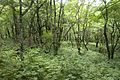 Forest in Doshi 16.jpg