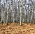 Forest in winter, and the snow - panoramio.jpg