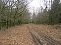 Forest track - geograph.org.uk - 505488.jpg