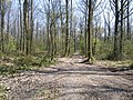 Foret de chateaugiron - panoramio.jpg