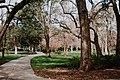 Forsyth Park, Savannah (Unsplash).jpg