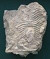 Fragment of relief Phoenician queen Nineveh.jpg