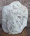 Frammenti in marmo, dal foro di traiano, 98-117 dc ca. 04.JPG