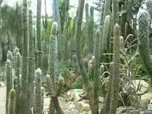 File:FrankfurtPalmengarten2004Video.ogv