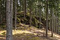 Frauenstein Nussberg Gauerstall bemooste Felsformation 21042020 8821.jpg