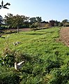 Free range hens, Dartington - geograph.org.uk - 1011189.jpg