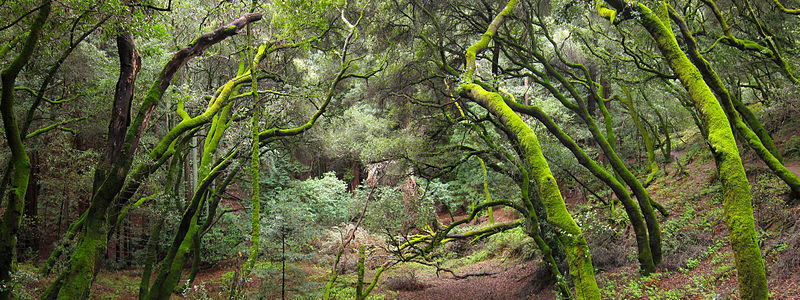 French Trail, Redwood Regional Park French Trail, Redwood Regional Park.jpg