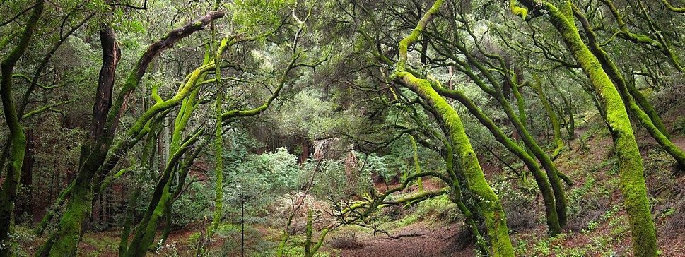 French Trail, Redwood Regional Park.jpg
