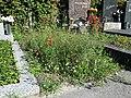 Friedhof Groß-Jedlersdorf Biodiversität sl2.jpg