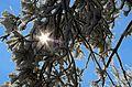 Frozen tree (31277168394).jpg