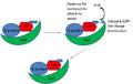 GAP mechanism of activity.png