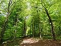 GOC Tring & Wendover Woods 042 Wendover Woods (33938317414).jpg