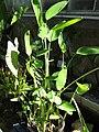 Gardenology.org-IMG 0894 rbgs10dec.jpg