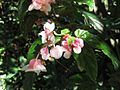 Gardenology.org-IMG 1180 rbgs10dec.jpg