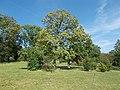 Gellert Hill Conservation Area. Jubilee Park from S. - Budapest District XI. Kelenhegyi Rd.JPG