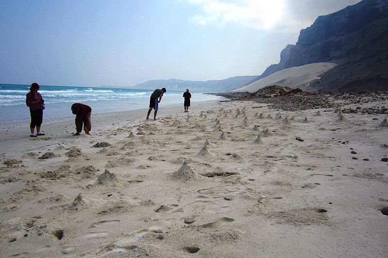 File:Ghost crab beach (6408208751).jpg