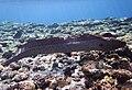 Gigantische Muräne im Roten Meer..DSCF3597ВЕ.jpg