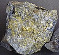 Gold and quartz (Holy Terror Mine, Keystone, Black Hills, South Dakota, USA) 3 (17032689540).jpg