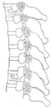 Section of the costotransverse joints from the third to the ninth inclusive.