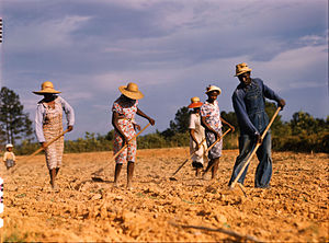 Sharecropping - Wikipedia