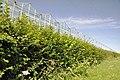 Greenhouse perspective - Llandow - geograph.org.uk - 1430133.jpg