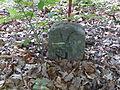 Grenzstein HKSt Nr 21.JPG