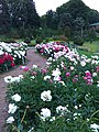 Gryshko Botanical Garden (May 2019) 14.jpg