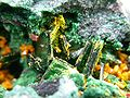 Guilleminite-Kasolite-Malachite-rads-36b.jpg