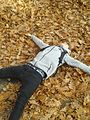 Guy lying down in leaves.jpg