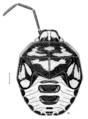 HEMI Pentatomidae Glaucias amyoti last instar.png