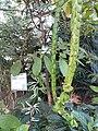 HK 香港公園 Hong Kong Park 植物 樹木 plant green leaves December 2020 SS2 01.jpg