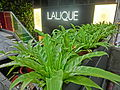 HK Central Ice House Street 樂成行 Baskerville House 雪廠街 Ice House big green leaves Lalique shop April 2013.JPG