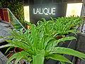 HK Central Ice House Street 樂成行 Baskerville House 雪廠街 Ice House big green leaves Lalique shop April 2013.JPG