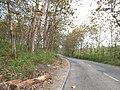 HUTAN JATI GUNUNG GIGIR - panoramio.jpg