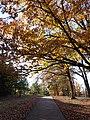 Hackleburg, AL 35564, USA - panoramio (5).jpg