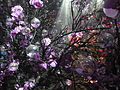Haifa International Flower Exhibition P1130989.JPG