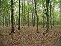 Hambach forest 23.jpg