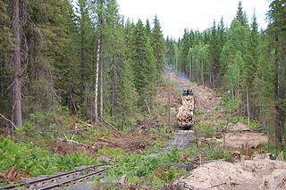 Nyubskaya narrow-gauge railway