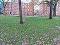 Harvard University,. November, 2019. pic.r2b Cambridge, Massachusetts.jpg