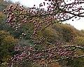 Hawthorn berries - geograph.org.uk - 1037893.jpg