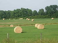 Hay field north of Athens, LA IMG 3638