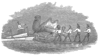 United States Camel Corps - Drawing of loading a camel