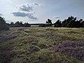 Heide mit Moosen und Steinen.jpg