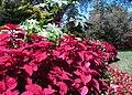 Hillwood Gardens in September (21660313225).jpg