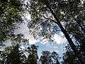 Himmel am Birkensee - panoramio.jpg
