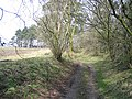 Hollow way at Gwysaney - geograph.org.uk - 736042.jpg