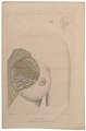 Homo sapiens - borst - 1700-1880 - Print - Iconographia Zoologica - Special Collections University of Amsterdam - UBA01 IZ19600083.tif