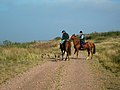 Horse Riders and their Dogs - geograph.org.uk - 261847.jpg